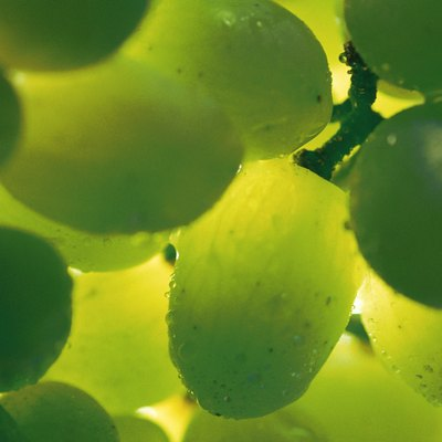 DIY Hydroponic Grapes