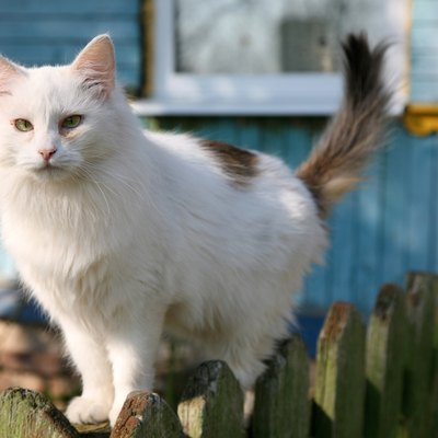 What Can I Put on My Fence to Keep Cats From Walking on It?