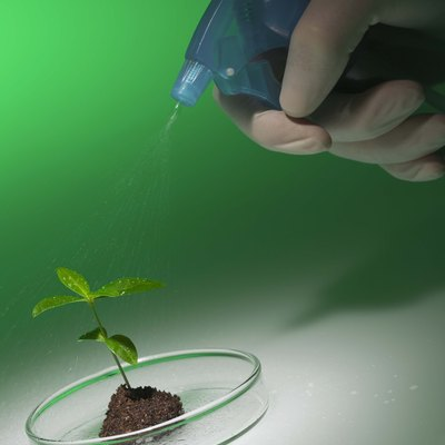 Hydrogen Peroxide for Boosting Plant Growth