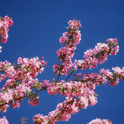 Blossom Identification