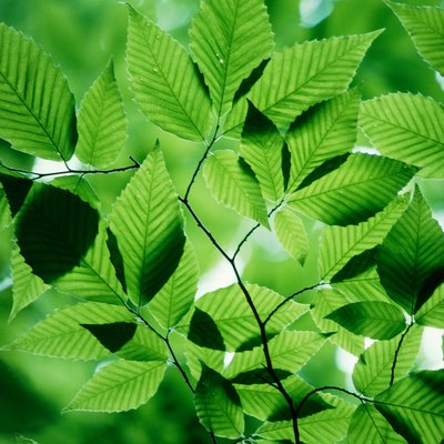 Artificial Photosynthesis Pros and Cons