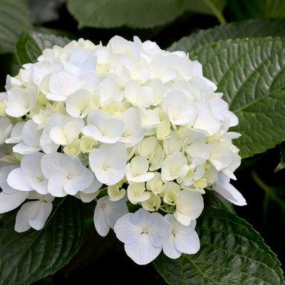 Names of Flowering Shrubs