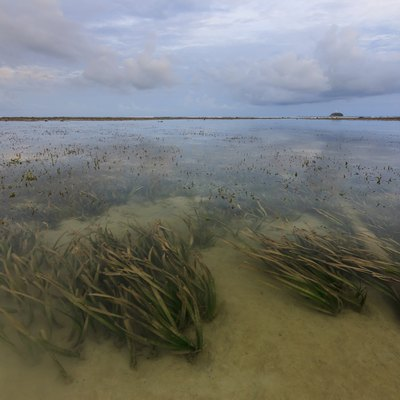 What Are the Adaptations of Algae?