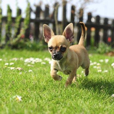 Dog-Safe Shade Perennials