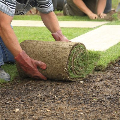 The Best Time to Lay Sod in Southern California