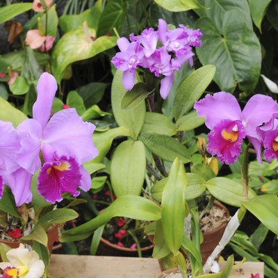 How to Make an Orchid Bloom