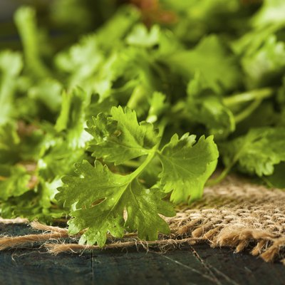 How & When to Harvest Cilantro