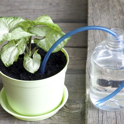 Invention of watering plants creative concept