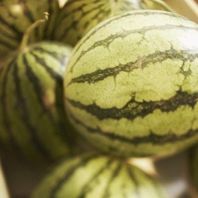 How to Grow Tomatoes, Watermelons & Cantaloupe Together