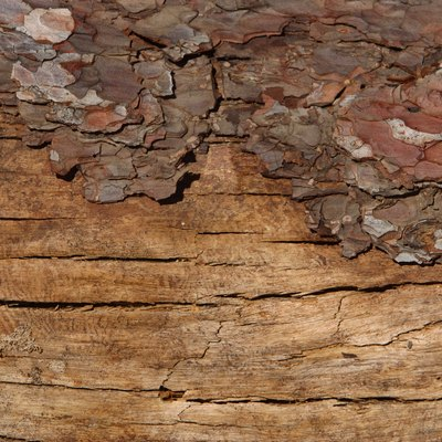 Can Mulberry Wood Be Burnt in Your Fireplace?