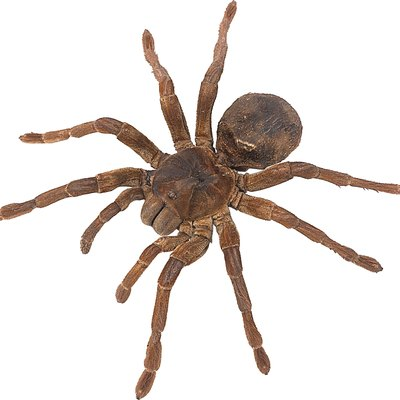 What Type of Spiders Are in Pools?