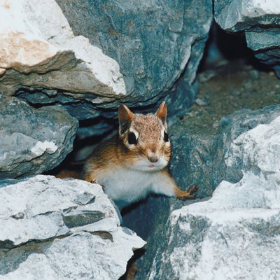 How to Tell a Mole Hole From a Chipmunk Hole