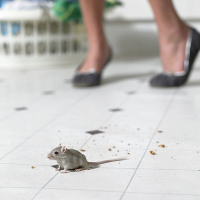 Mouse on kitchen floor, woman standing in background, low section