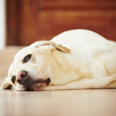 The Best Flooring When You Have Dogs