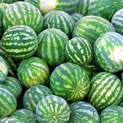 The Reason for Soft Watermelons