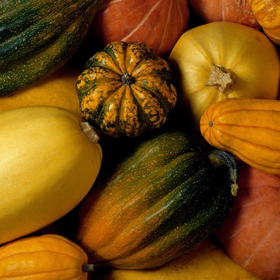 How to Grow Kalabasa Philippine Squash