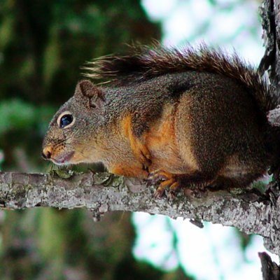 A Squirrel Baffle for Trees