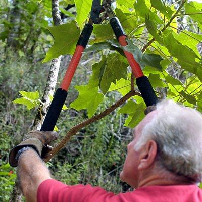 How to Make Your Own Pruned Tree Paint