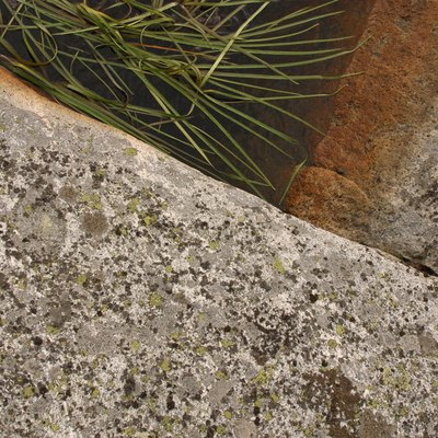 Vegetation by concrete slab