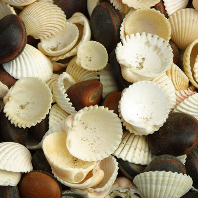 Decorating a Coastal Seashell Ball Craft