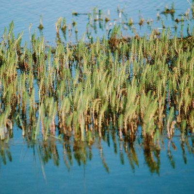 Names of Tall Grasses That Grow Around Lakes