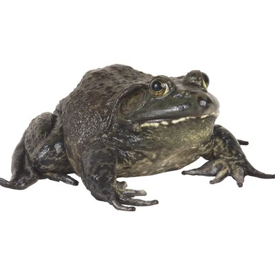 What Can You Put in Pools to Kill Frogs?