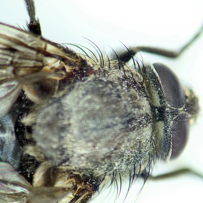 How to Get Rid of Gnats or Fruit Flies Indoors