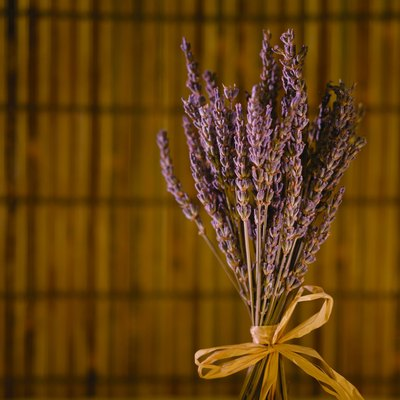 Lavender Oil to Repel Ants