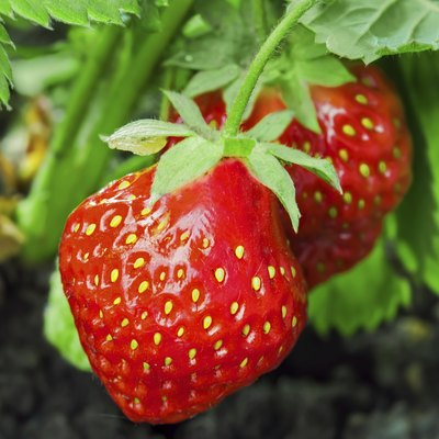 How Much Sun Do Strawberry Plants Need?