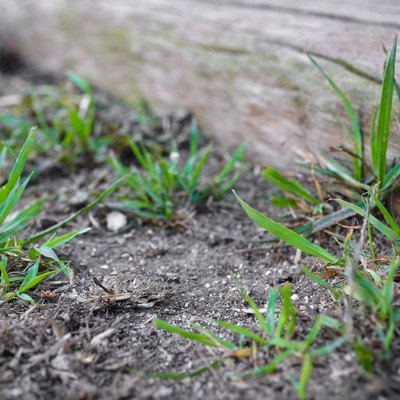 How to Stop Grass & Weeds From Growing Close to a Fence