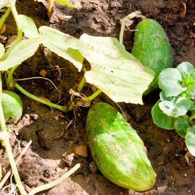 When to Plant a Vegetable Garden in Texas