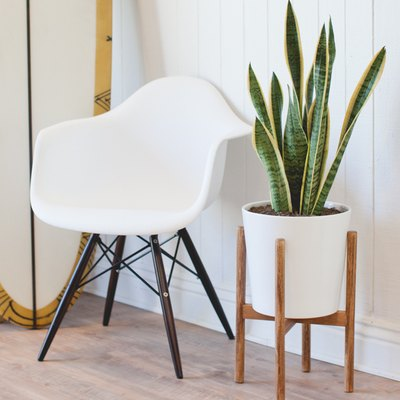 How to Build a Midcentury-Inspired Plant Stand