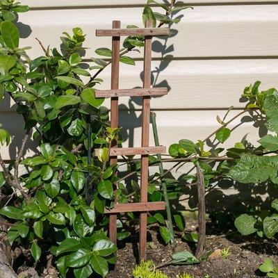 Plant Care for a Jasmine