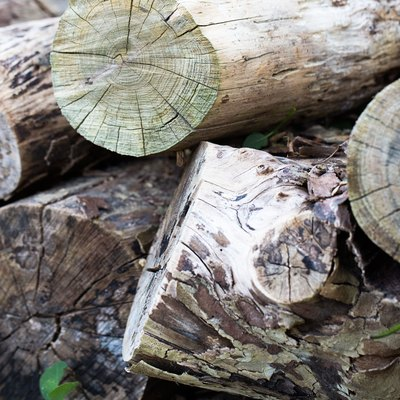 How to Speed Up Wood Decay