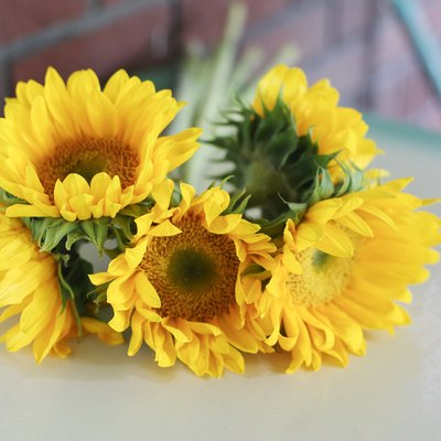 What Should You Do With Sunflowers After They Bloom?