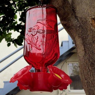 Hummingbird feeder in tree