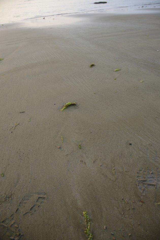 Beach with brown silt