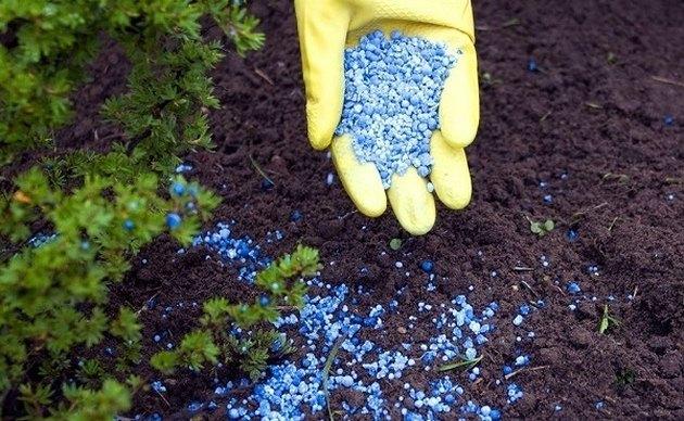 Fertilizing the garden.