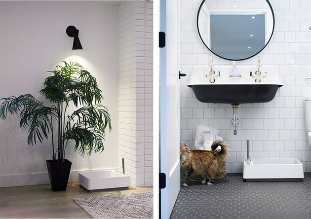 two photos, one showing a plant and white littler box nearby, another showing a bathroom with a cat and white litter box nearby