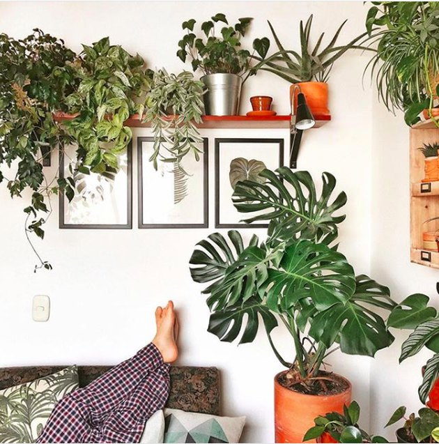 plant lady instagram photo