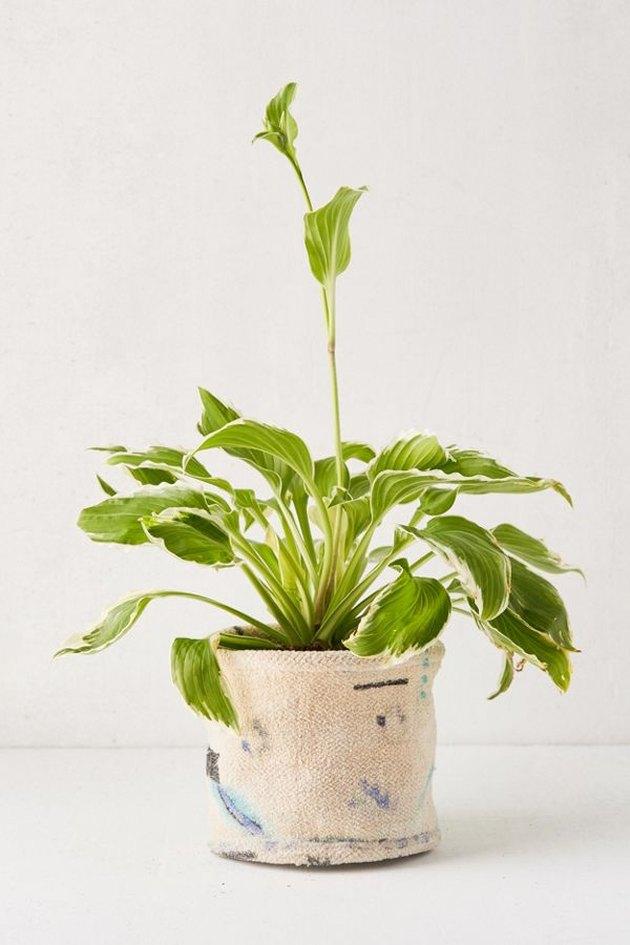 Chenille Planter Holder, $16