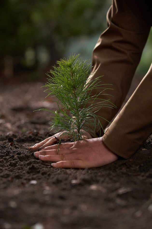 person planting in the dirt
