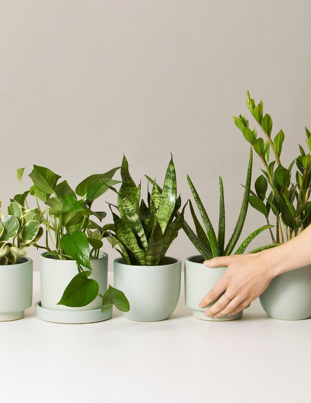 Monthly plant subscription from The Sill