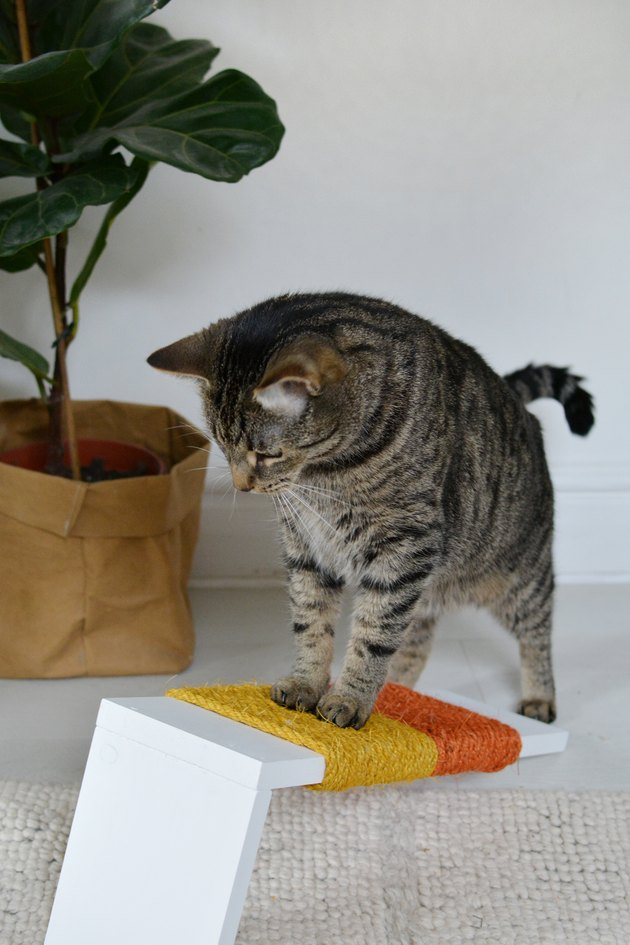 Cat playing with an orange and yellow scratching post