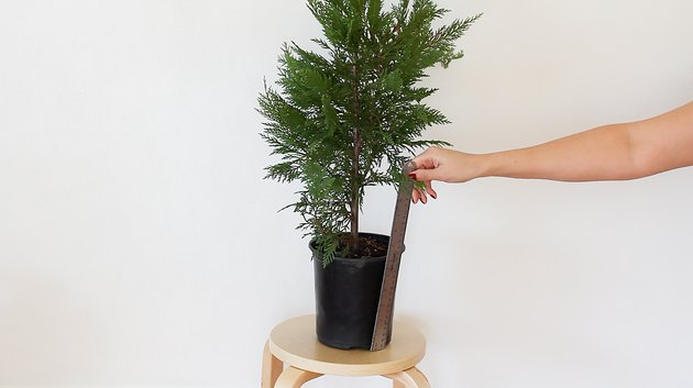 Measuring height of planter pot