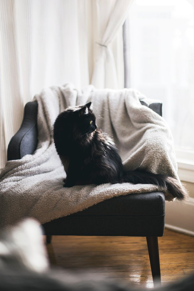 cat sitting in accent chair looking out of the window
