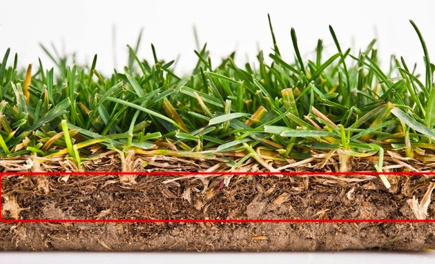 Grass roots.