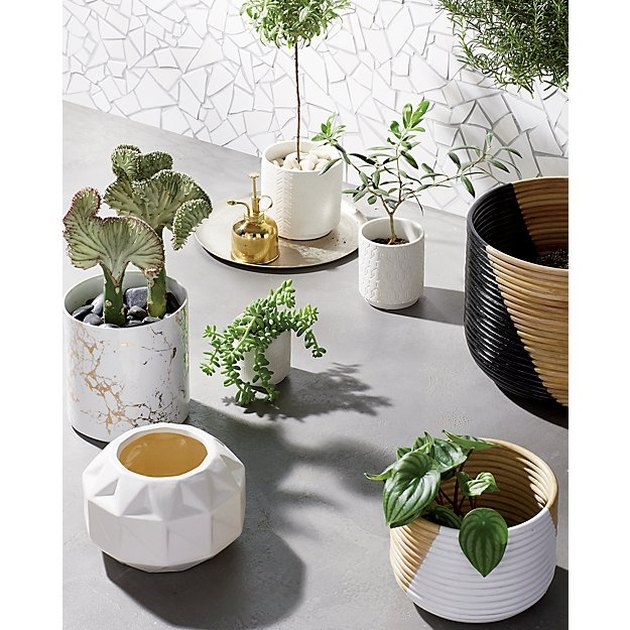 Best Planter Destinations CB2