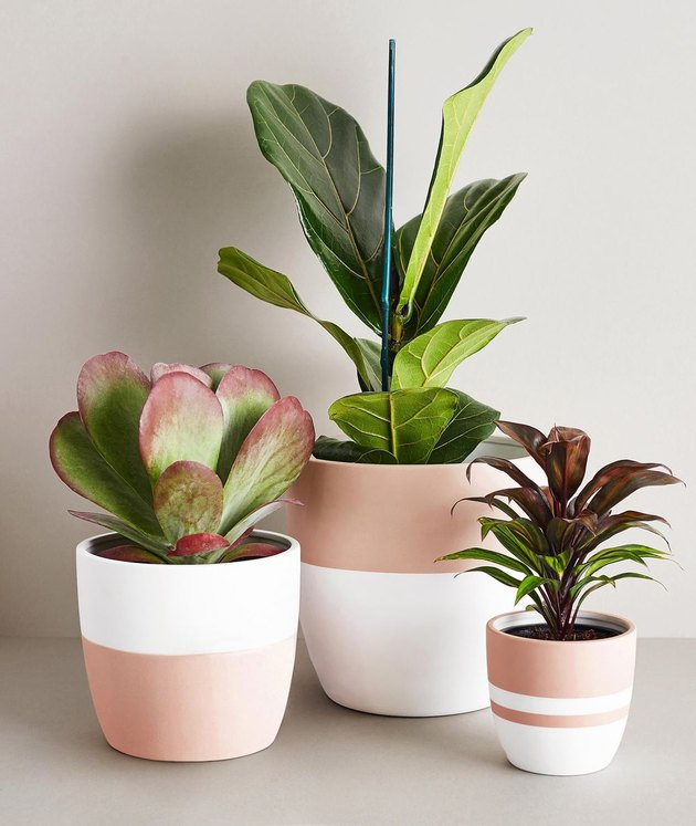 pink and white ceramic pots