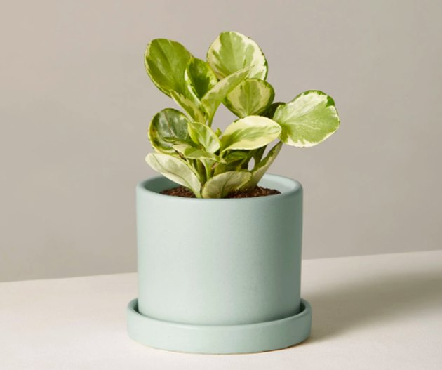 plant in green planter